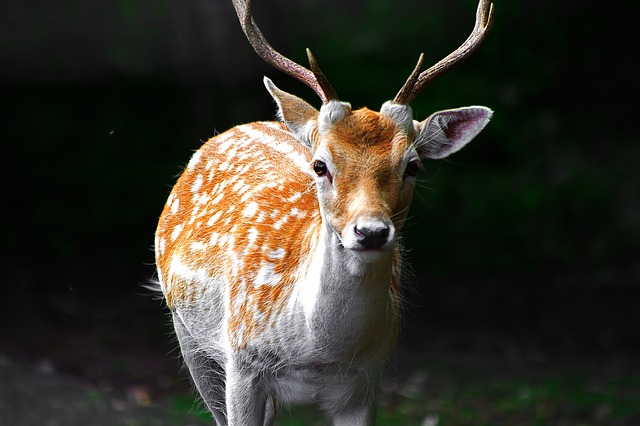 deer-1705102_640