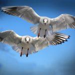 gulls-654046_640