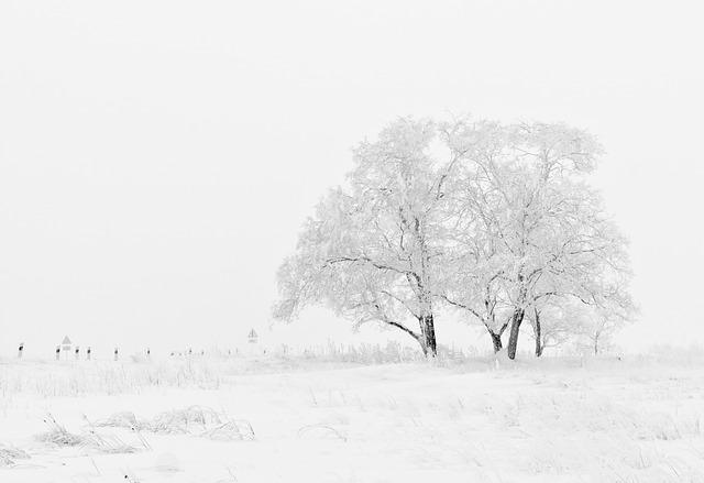 winter-20234_640