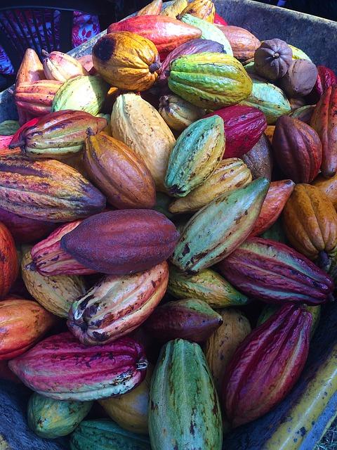 cocoa-pods-1424219_640