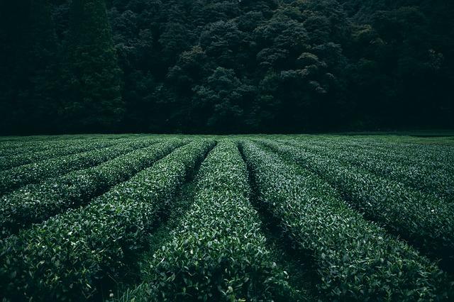 plantation-945400_640