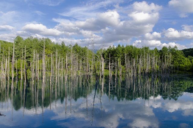 blue-pond-212109_640