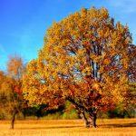 tree-99852_640 (1)