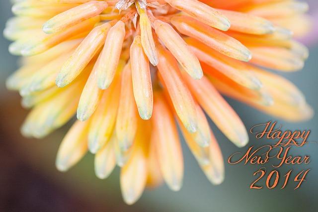 flowers-234965_640