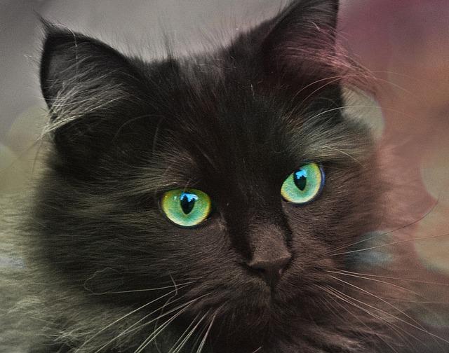 cat-629419_640